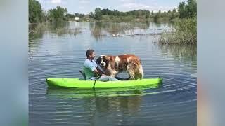 Funny Dog Videos | Komik Köpek Videoları