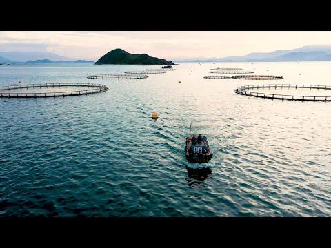 Australis Aquaculture: Raising The Bar With Barramundi