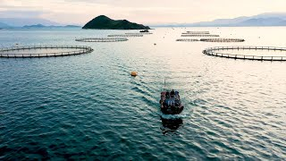 Australis Aquaculture: Raising the Bar with Barramundi