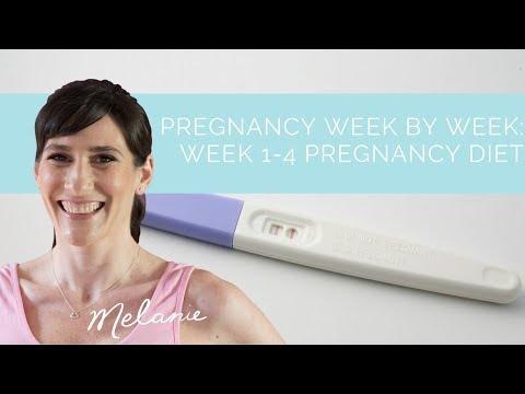 Week 2 of the Pregnancy