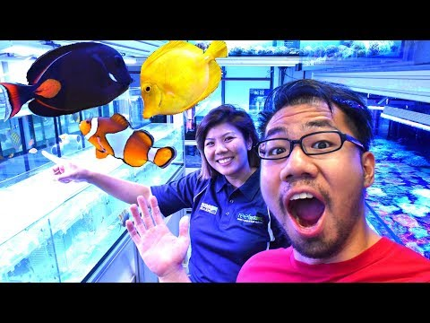 AMAZING SINGAPORE SALTWATER AQUARIUM TOUR