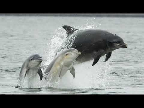 Facts: The Bottlenose Dolphin