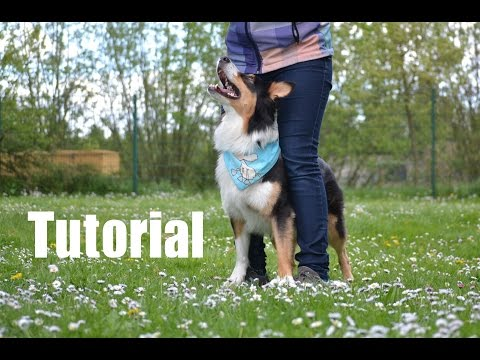 Dog Trick Tutorial: Your feet on mine