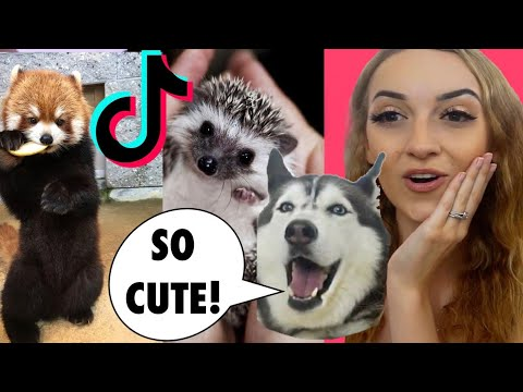 My Husky & I React To CUTE Animal Tik Toks! 😱😍