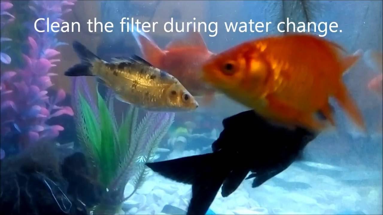 Fish aquarium how to maintain - Diy Aquarium How To Keep Koi Gold Fish Maintain Healthy Aquarium