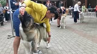 """Международная выставка собак,""""Кинолог"""" в Витебске, 26.05.2019 года(8)"""