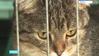 В Пензе пройдет «Выставка бездомных кошек»