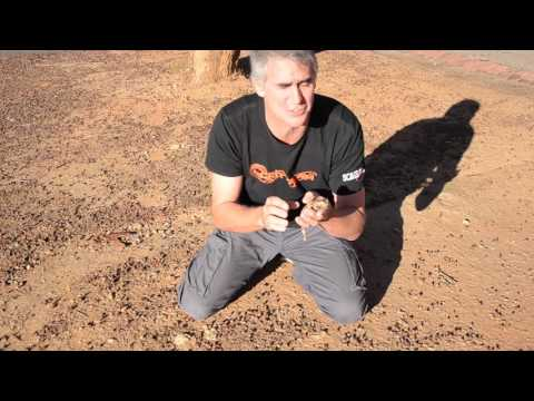 Australian Thorny Devil - CrittaCam