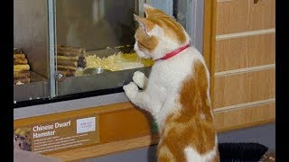 큐트 매일 페트 숍에 내점해서 윈도 쇼핑을 즐기는 것은? 애완 동물점의 아침 제일의 손님 길고양이의 모습이 …