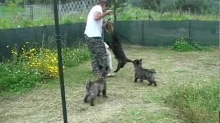 1° Italian Cairn Terrier Fun Day Parte 1/2