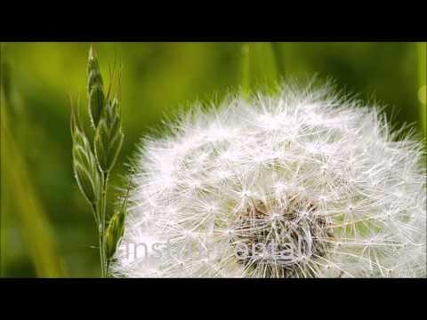 God Bless - Kehidupan (Instrumental/Karaoke)