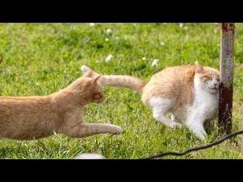 Смешные кошки коты смешные за 29 января