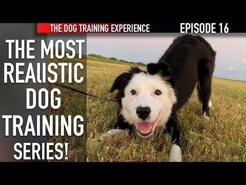 New Episode! How I'm Training My Puppy To Walk On Leash And Settle Down!