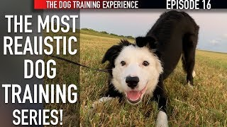 new-episode-how-i-m-training-my-puppy-to-walk-on-leash-and-settle-down