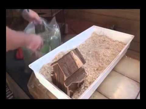 hamster winterschlaf
