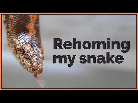 why-i'm-rehoming-a-pet-reptile-for-the-first-time