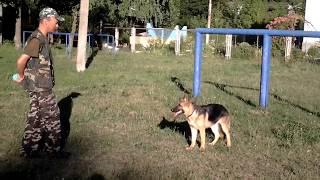 Фрау 6 мес. Тренировка с лакомством и мячиком.