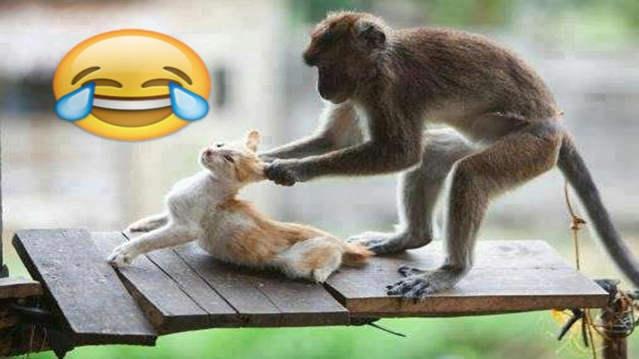 شاهد مضحك جدا جدا القرد سكرانة تعمل مشاكل القطط  | MONKEYS Vs CATS | Humorous Movies