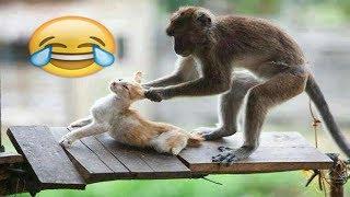 شاهد مضحك جدا جدا القرد سكرانة تعمل مشاكل القطط  | MONKEYS Vs CATS | Funny Videos