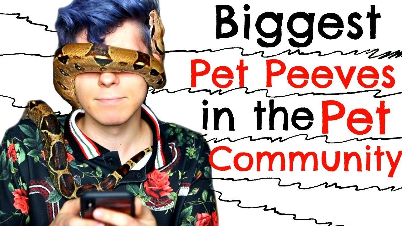 my-biggest-pet-peeves-in-the-pet-community