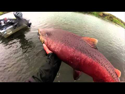 Fly Fishing Alaska with Dave Duncan and Sons