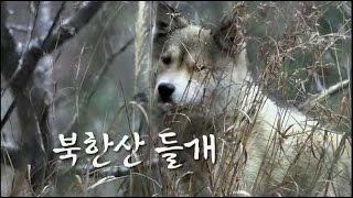 하나뿐인 지구 - Our sole earth_북한산 들개_#001