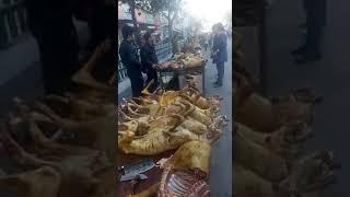 Продажа убитых собак на рынке в японии