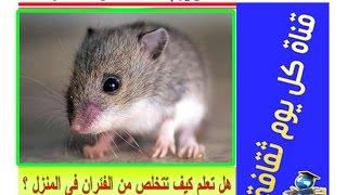 مكافحة الفئران هل تعلم كيف تتخلص من الفئران فى المنزل ؟ ثقف نفسك