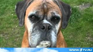 В Великобритании клонировали собаку