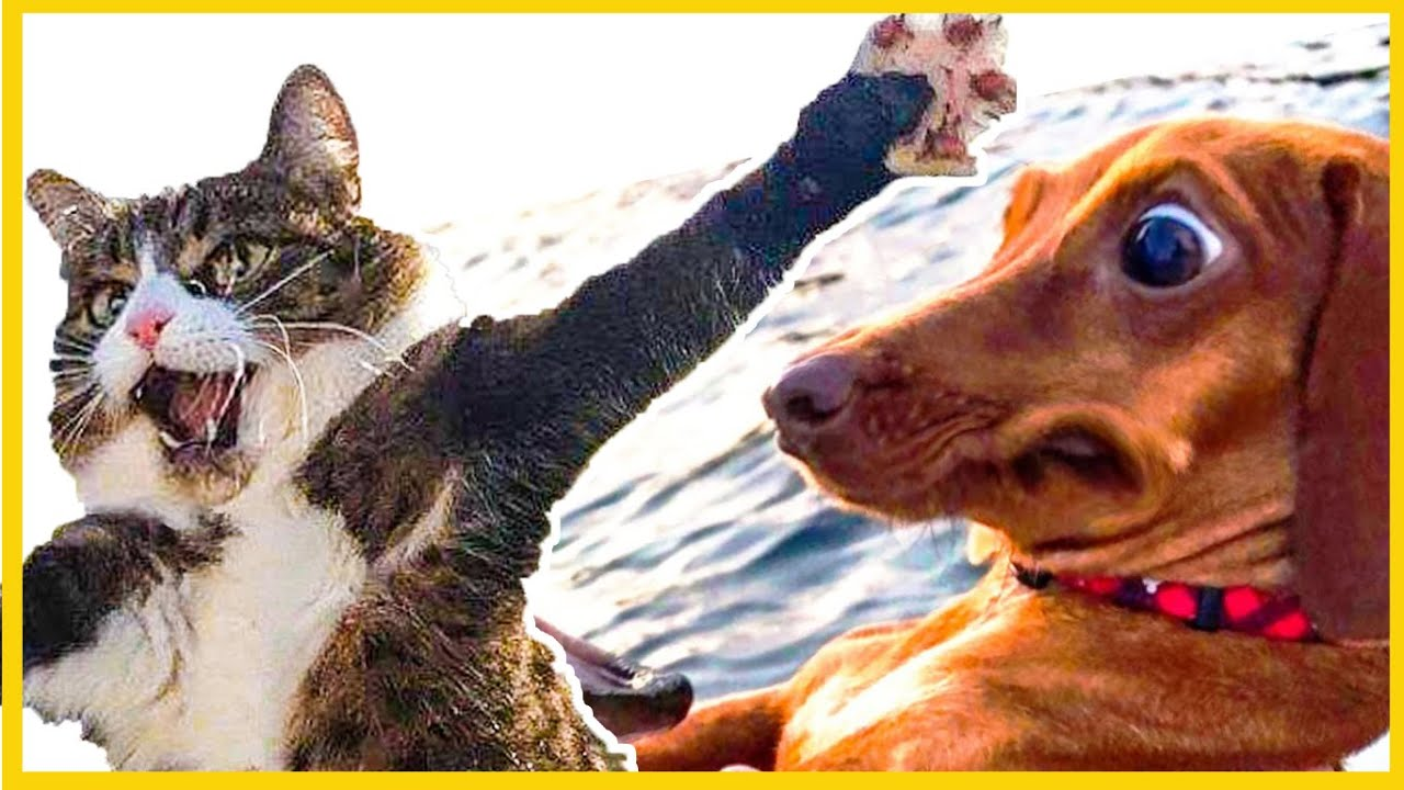 😁 Funny Cats and Dogs 2020 - AWESOME Pet Animals Life Video 😇 compilation FAILS