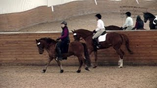 An Icelandic in a Dressage World (he's the little guy!)