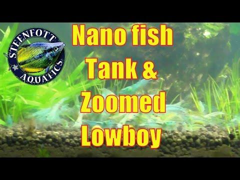 Nano Fish Tank, Blue Pearl Shrimp, Fancy Plecos, Aquarium Maintenance, A Day in the Fish Room