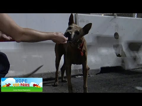 Senior homeless dog living at the port - LOOK at the arrow and see how we ended up on the crane!