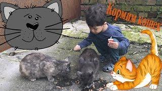 Кормим бездомных кошек. Видео для детей. Кошка с котятами.