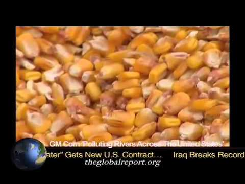 GM Corn 'Polluting Rivers Across The United States'