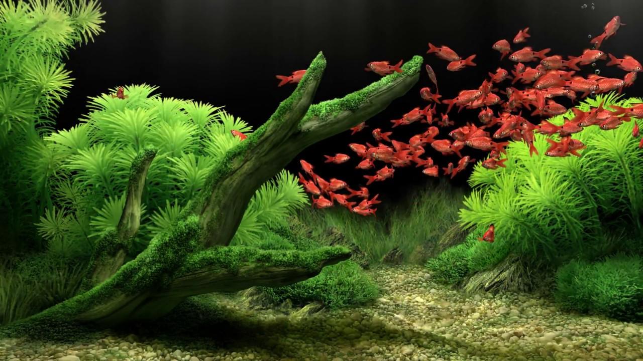 Free Download Wallpaper 3d Windows 7 Dream Aquarium All The Fish 4k Youtube