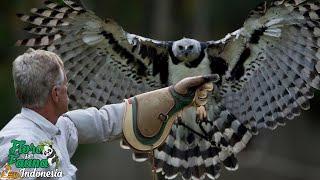 Download Mp3 Burung Elang Raksasa Harpy | Flora Dan Fauna Indonesia