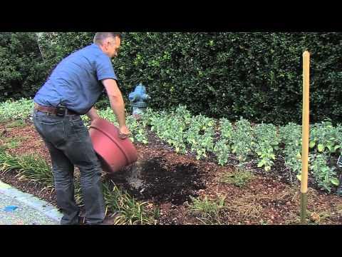 Dallas Arboretum - How to Plant Bulbs