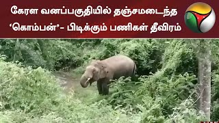 கேரள வனப்பகுதியில் தஞ்சமடைந்த 'கொம்பன்'- பிடிக்கும் பணிகள் தீவிரம் | Elephant