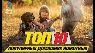 Топ 10 самых популярных домашних животных \ Top 10 Most Popular Pets