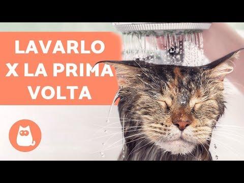 Lavare il gatto IN CASA per la prima volta – Fare il bagno al gatto ADULTO