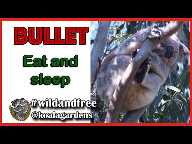 Bullet eat and sleep June 2020