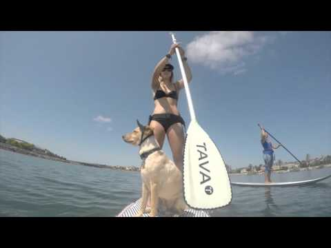 The SUP Connection - San Diego SUP Rentals Point Loma Liberty Station
