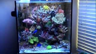34 Gallon Solana Reef Tank