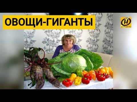 """Победила в """"Битве урожаев"""", была и у Малахова, и на обложках. Людмила делится огородными секретами!"""
