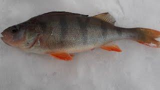 Рыбалка на озере Большой Куяш 17 марта 2020 года