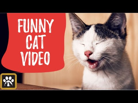 This Video Will Crack You Up 😹😻😹 – Very Funny Cat And Dog Videos
