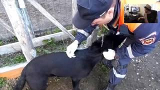 как эффективно обработать собаку от клещей