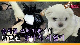 [TV 동물농장 레전드…