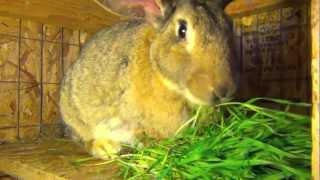 Интересная клетка для больших кроликов гигантов